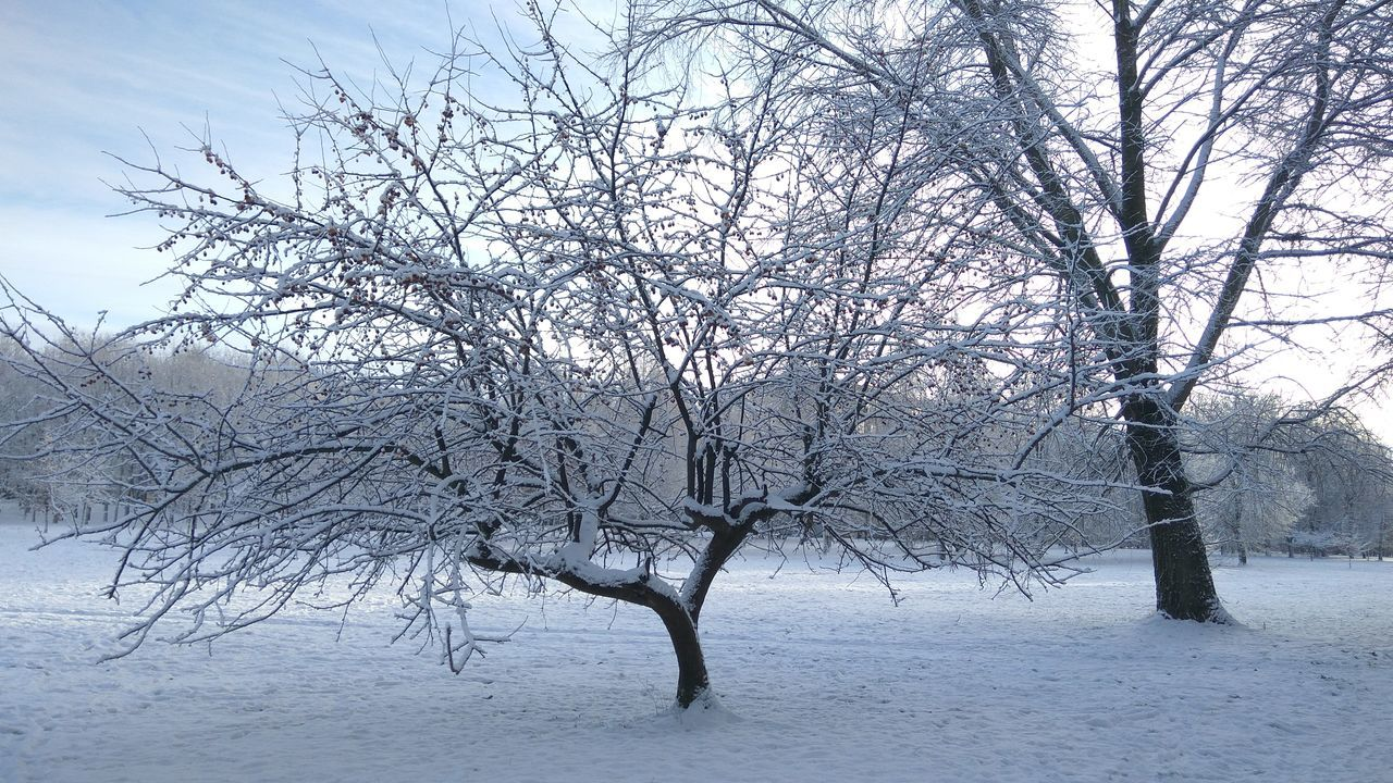 Bare Tree Beauty In Nature Cold Temperature Day Nature Snow Tree Winter