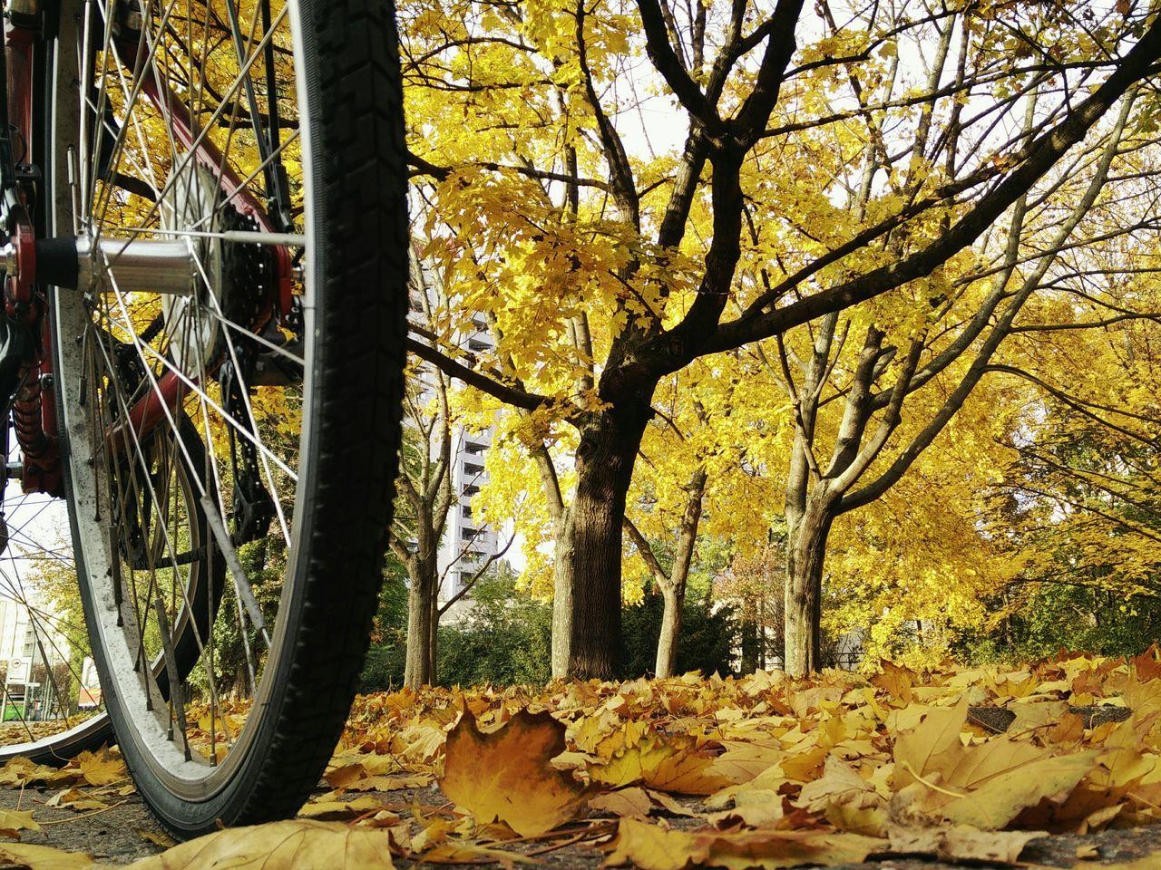Autumn Bicycle Wheel Tree No People Mobilephoto