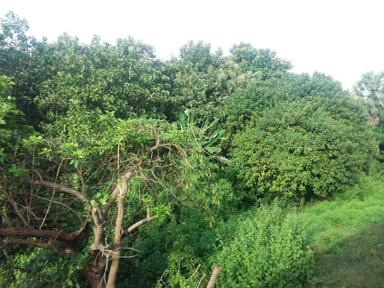 growth, nature, tree, green, no people, tranquility, green color, field, plant, outdoors, day, beauty in nature, foliage