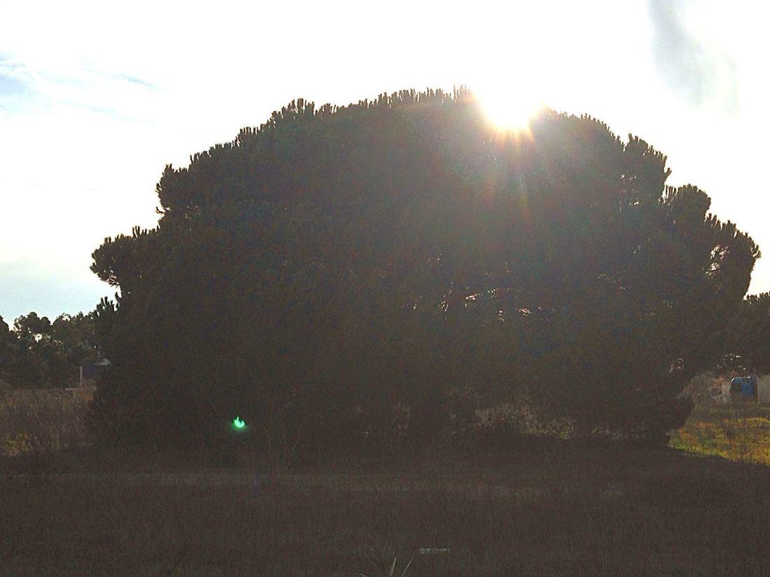 Taking Photos Pinheiros Nature Nature Photography Nature_collection Natureza Naturelovers Beautiful Nature Azeitao