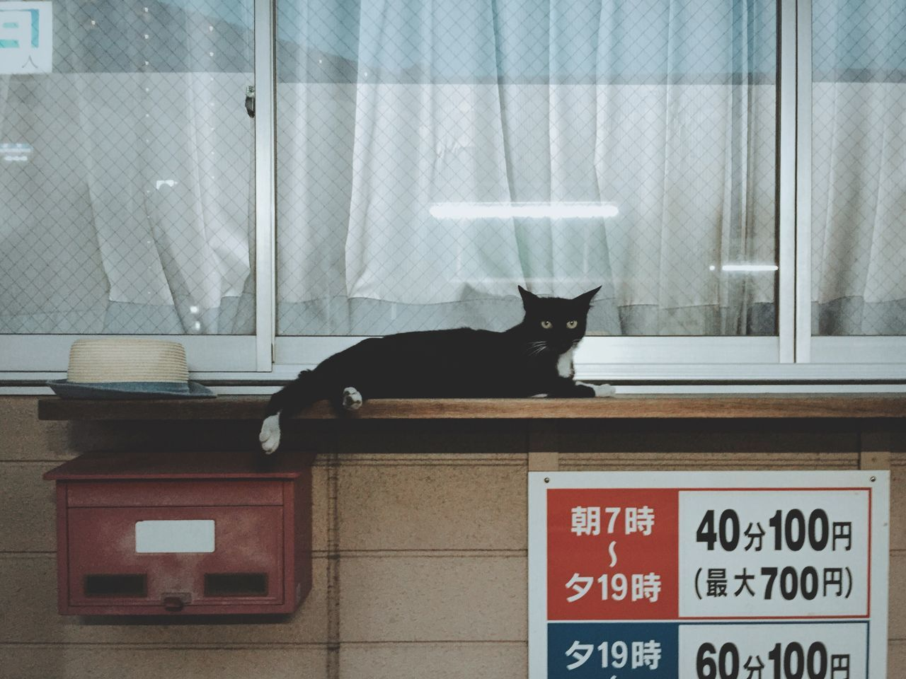 one animal, animal themes, pets, mammal, domestic cat, cat, text, domestic animals, alertness, feline, day, indoors, no people, architecture, time, clock