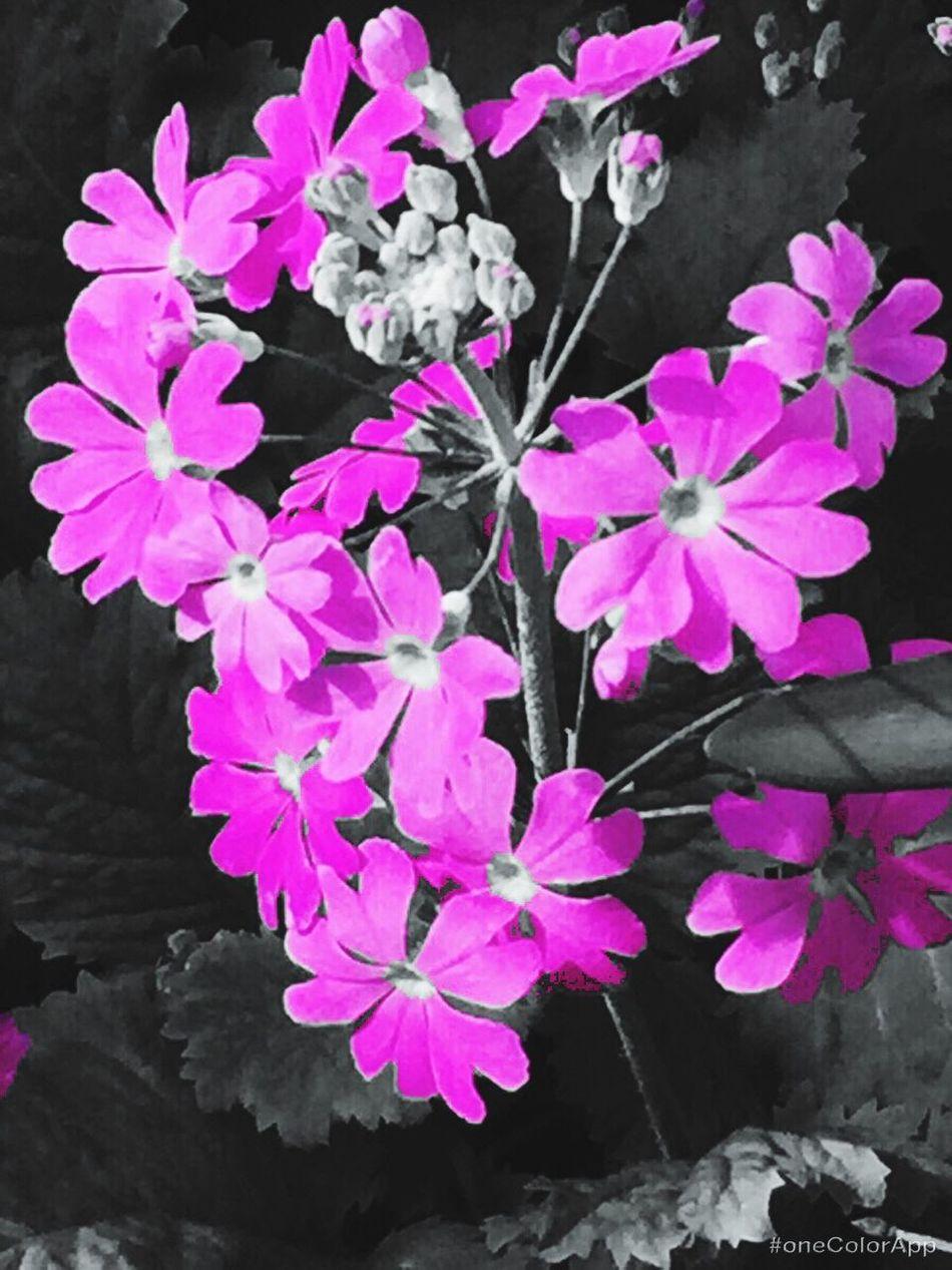 Tokyo Days Flower Head