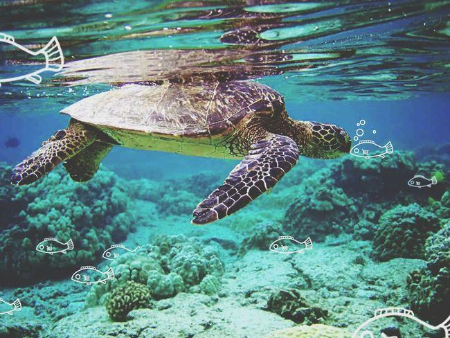 Turtle First Eyeem Photo