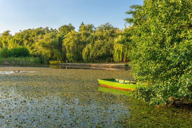 Sástó Blue Sky Boat Green Boat Hiking Destination Lake Lake And Trees Lakeside Magyarország Matra Mátra Mountain Nature Nature Photography Nature_collection Sony Sony A6000 Sonyalpha Summer Lake Sástó Trees And Water Trees In Background Wooden Boat