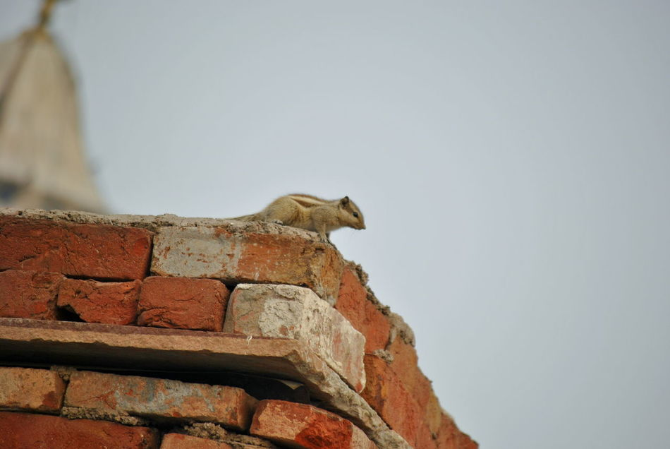 Animal Themes Animals In The Wild Baby Big Wall Brick Wall Bricks Brown Cute Animals Cute Pets Day Lone Animal Lonely No People One Animal Outdoors Pattern Pieces Red Sky Squirrel Adapted To The City