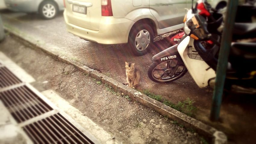 Streetcat Malaysia Contented_loneliness