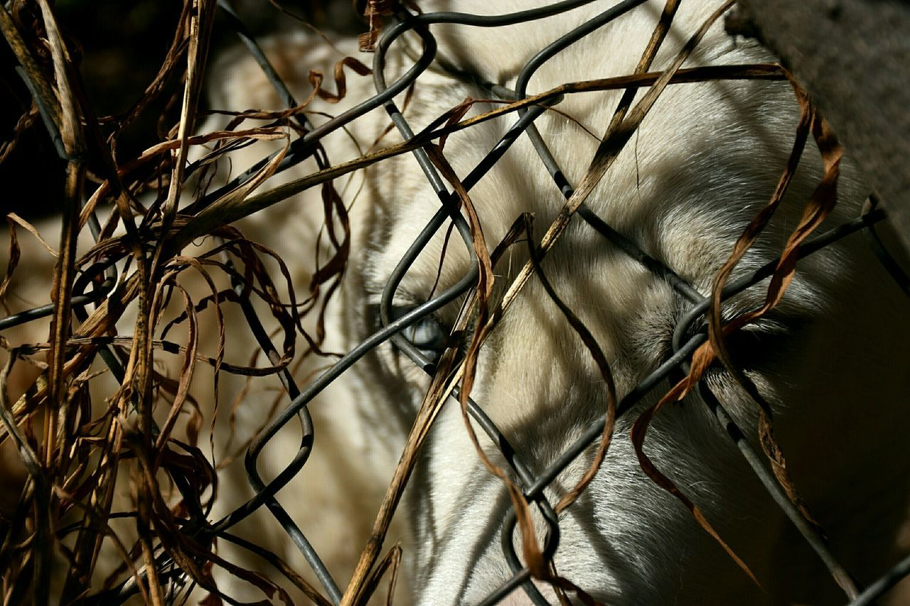Close-Up Of Dog By Chainlink Fence
