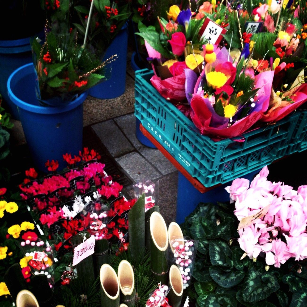 Flower Plant Nature Beauty In Nature Freshness Fragility Petal High Angle View Flower Shop No People Flower Head Blooming Growth Bouquet Day Flower Market