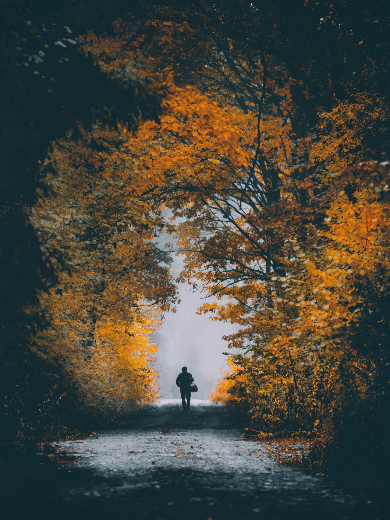 One Person Standing Rear View Full Length Real People Nature One Man Only Tree Men Beauty In Nature Outdoors Water Autumn Silhouette Forest Day Adults Only Scenics Only Men People