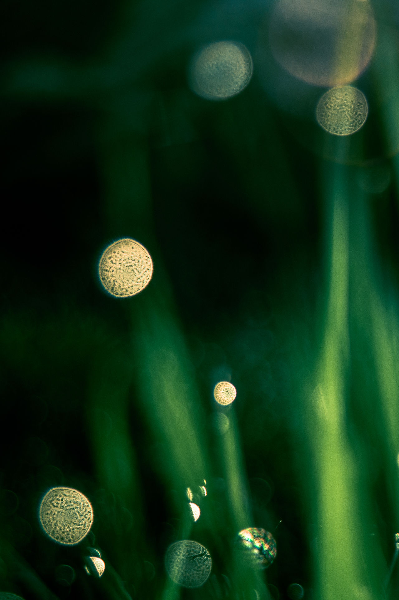 Bokeh Bokeh Bubbles Close-up Grass Meadow Nature Night No People Outdoors