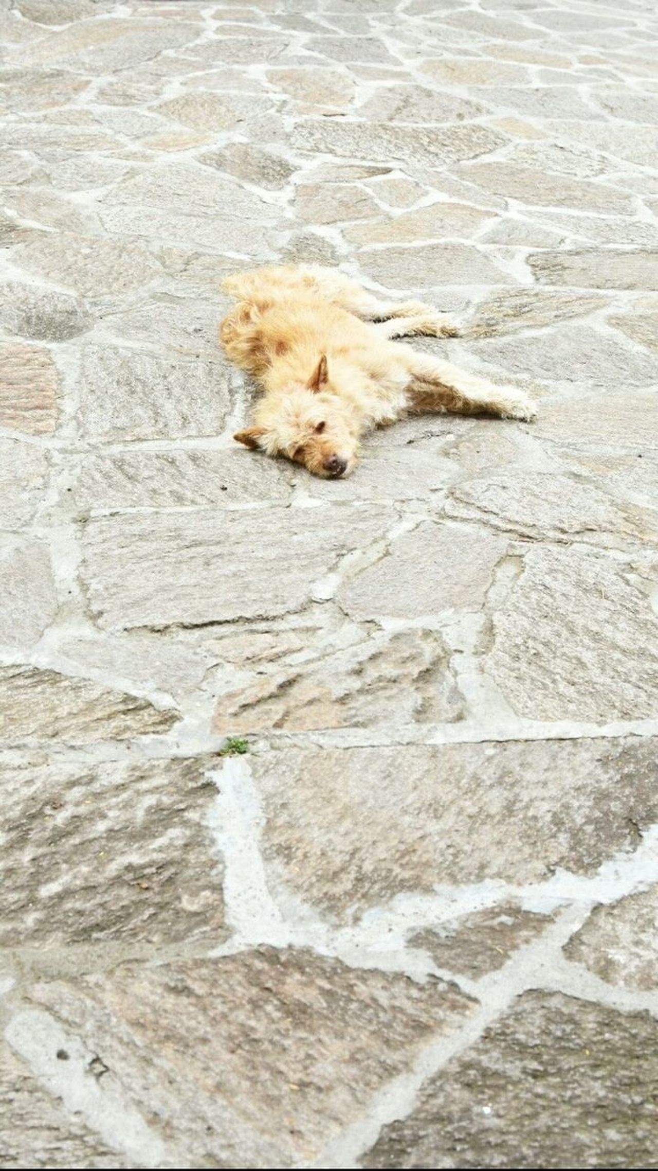 One Animal Animal Themes Dog High Angle View Outdoors Animals In The Wild Pets Domestic Animals