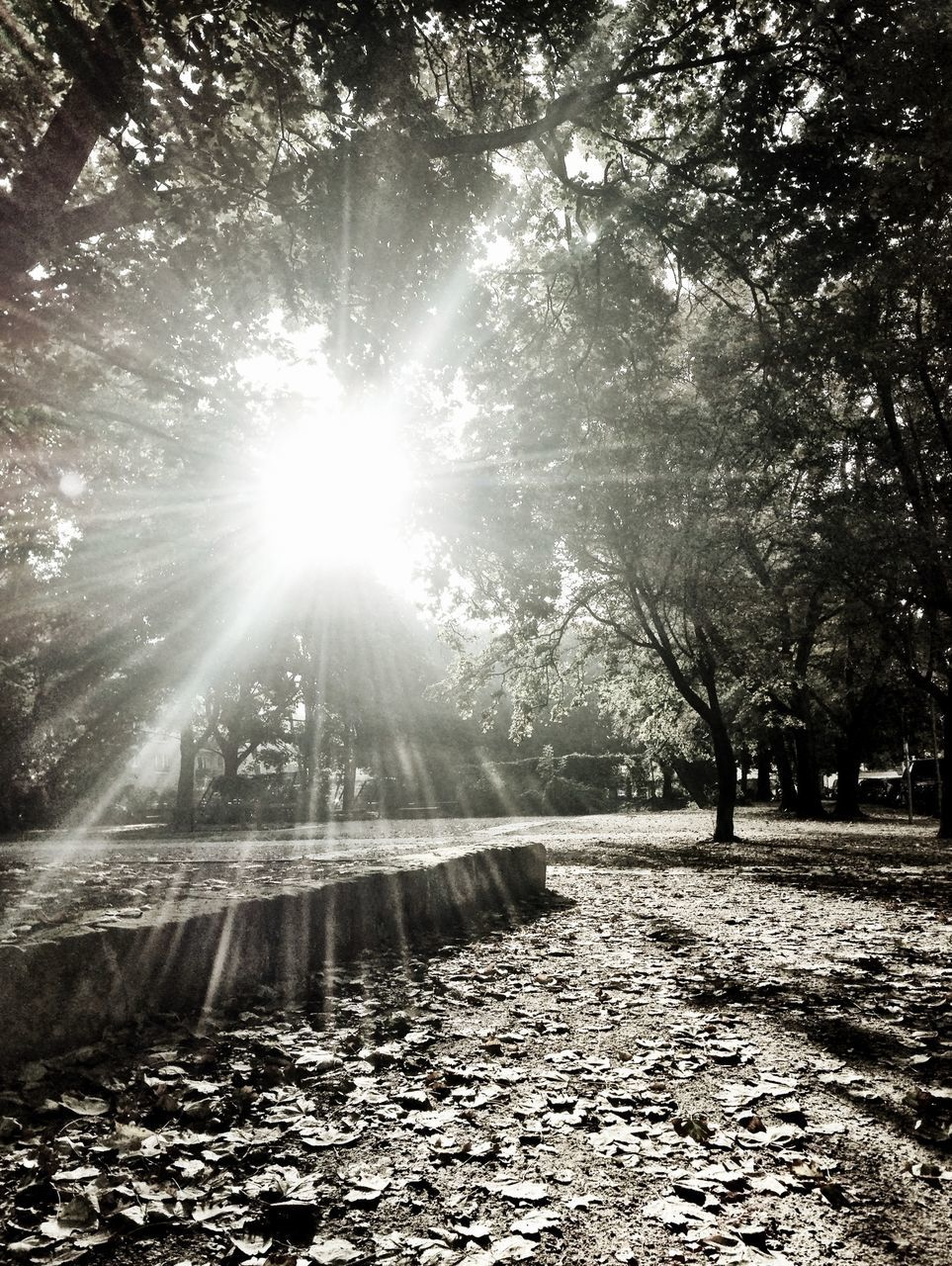 sunbeam, lens flare, sunlight, sun, tree, nature, tranquility, beauty in nature, outdoors, tranquil scene, scenics, no people, day, leaf, forest, sky