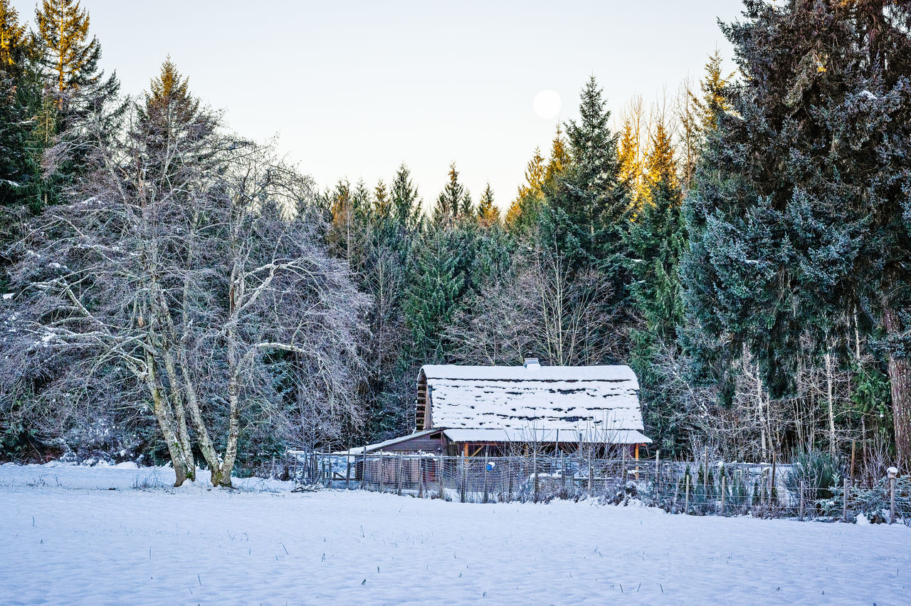 Moon Over the Barn Barn Beauty In Nature Cold Temperature Day Moon Nature No People Outdoors Sky Snow Snowing Tree Winter