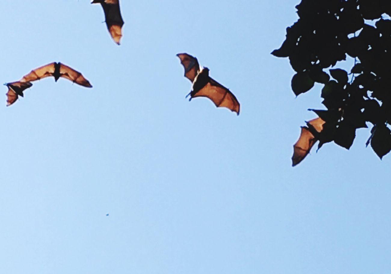 Bats above