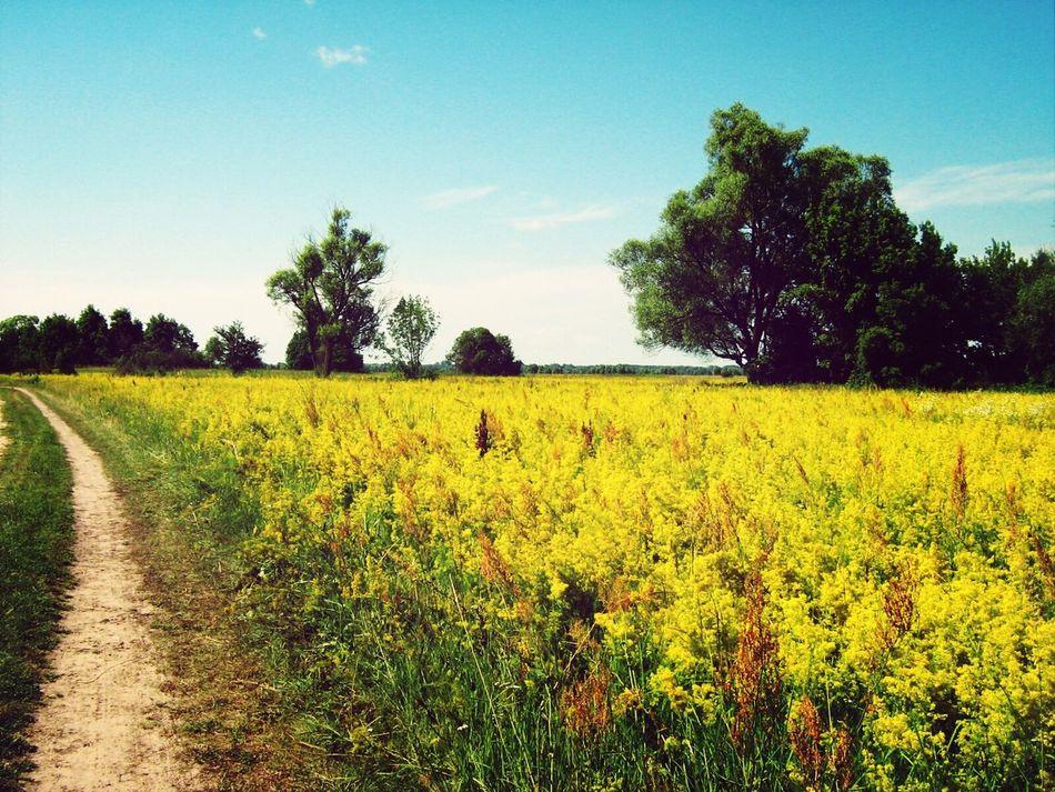 поле лето First Eyeem Photo