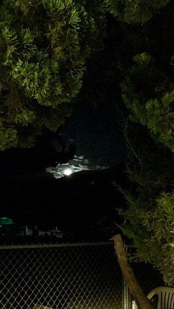 View from my patio. Full Moon Nightsky Beautifulmoon Moonlight Themoonisbeautiful Throughthetrees Lovetheview Fullmoon