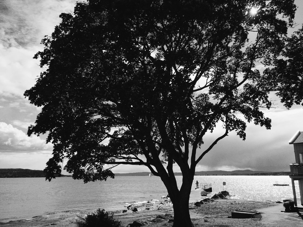 tree, water, sea, nature, tranquility, sky, tranquil scene, beauty in nature, scenics, outdoors, horizon over water, beach, growth, day, no people