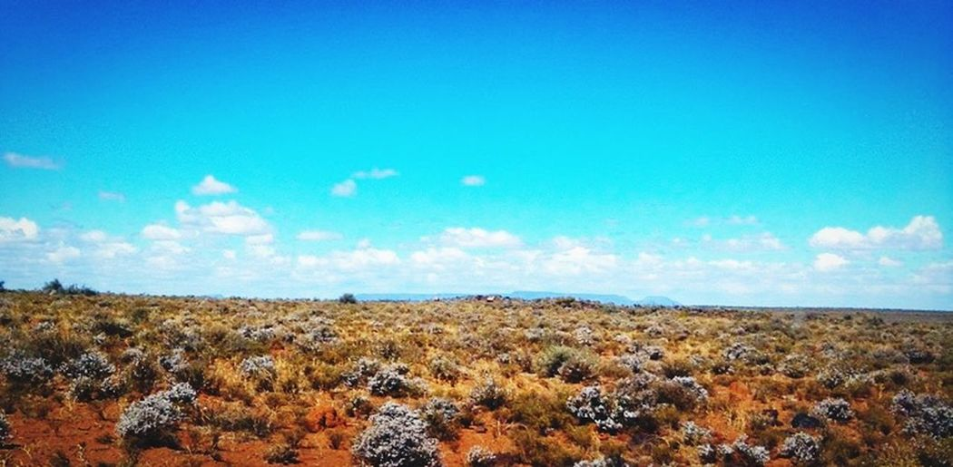 Deserts Around The World Semi-arid Desert South Africa Karoo