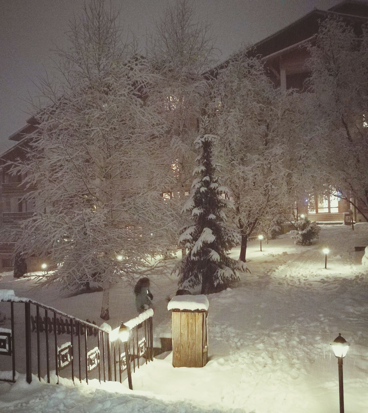 Winter Snow Cold Temperature Tree Nature Snowing Night Outdoors Outdoor Photography Outside Environment Snow ❄ Snow Covered Snowy