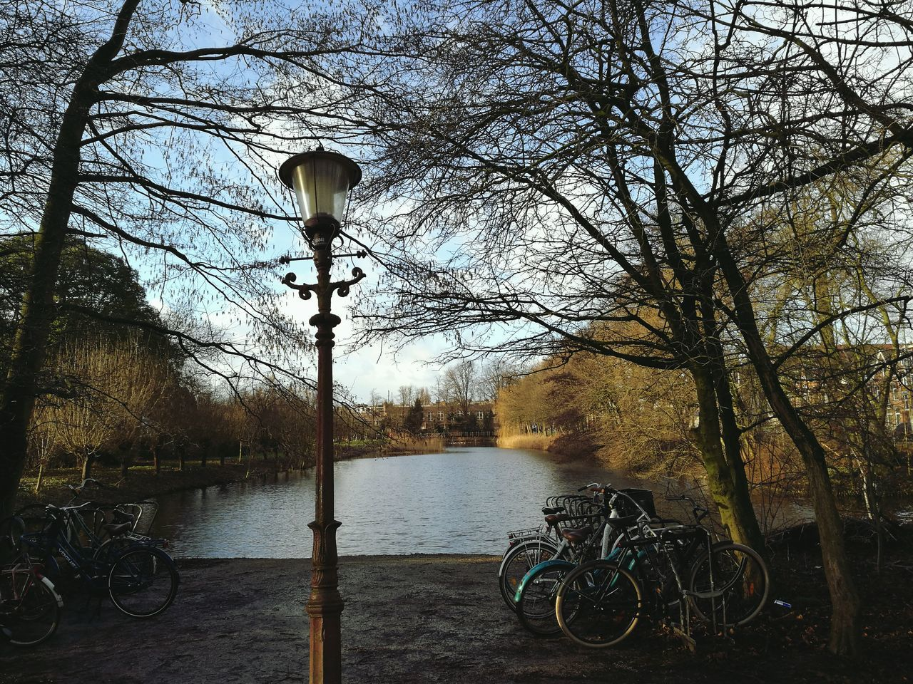 Tree Street Light No People Day Outdoors Nature Amsterdam Park Vondelpark Wolking Travelling Photography