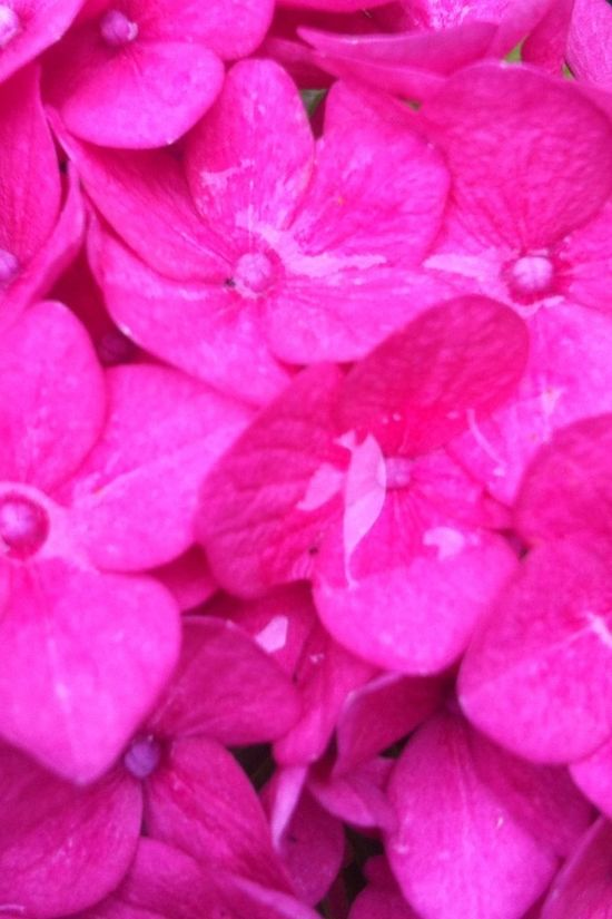 Flowers Autumn Pink
