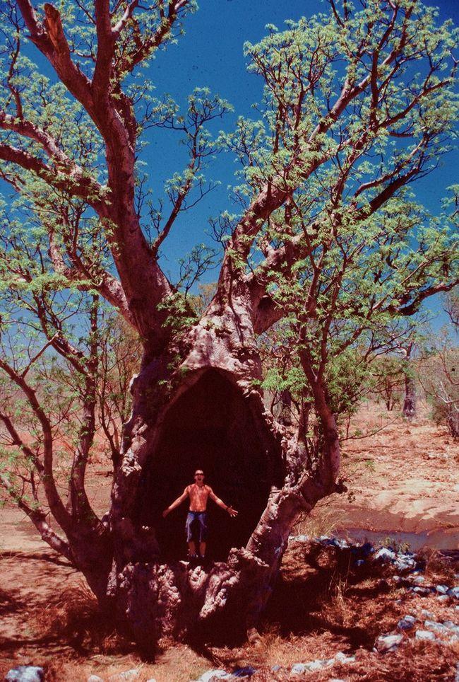 Scream Boab Tree Western Australia
