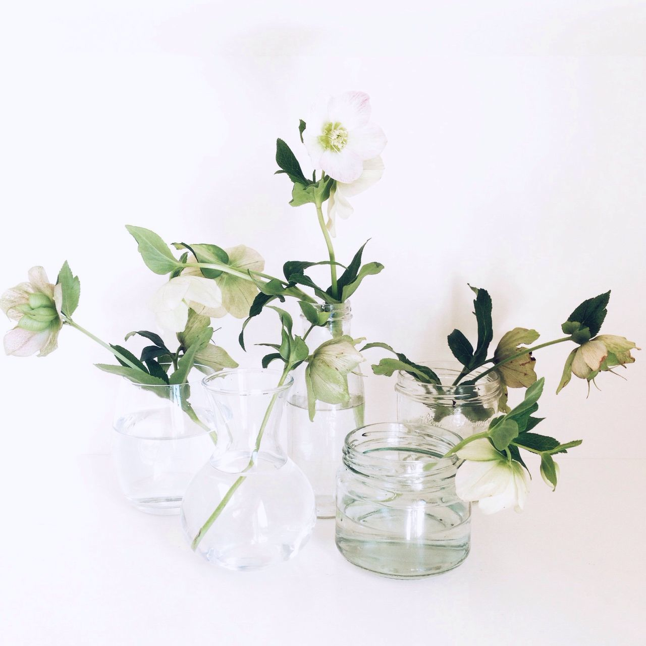 Beautiful stock photos of glass, Botany, Flower, Glass, No People