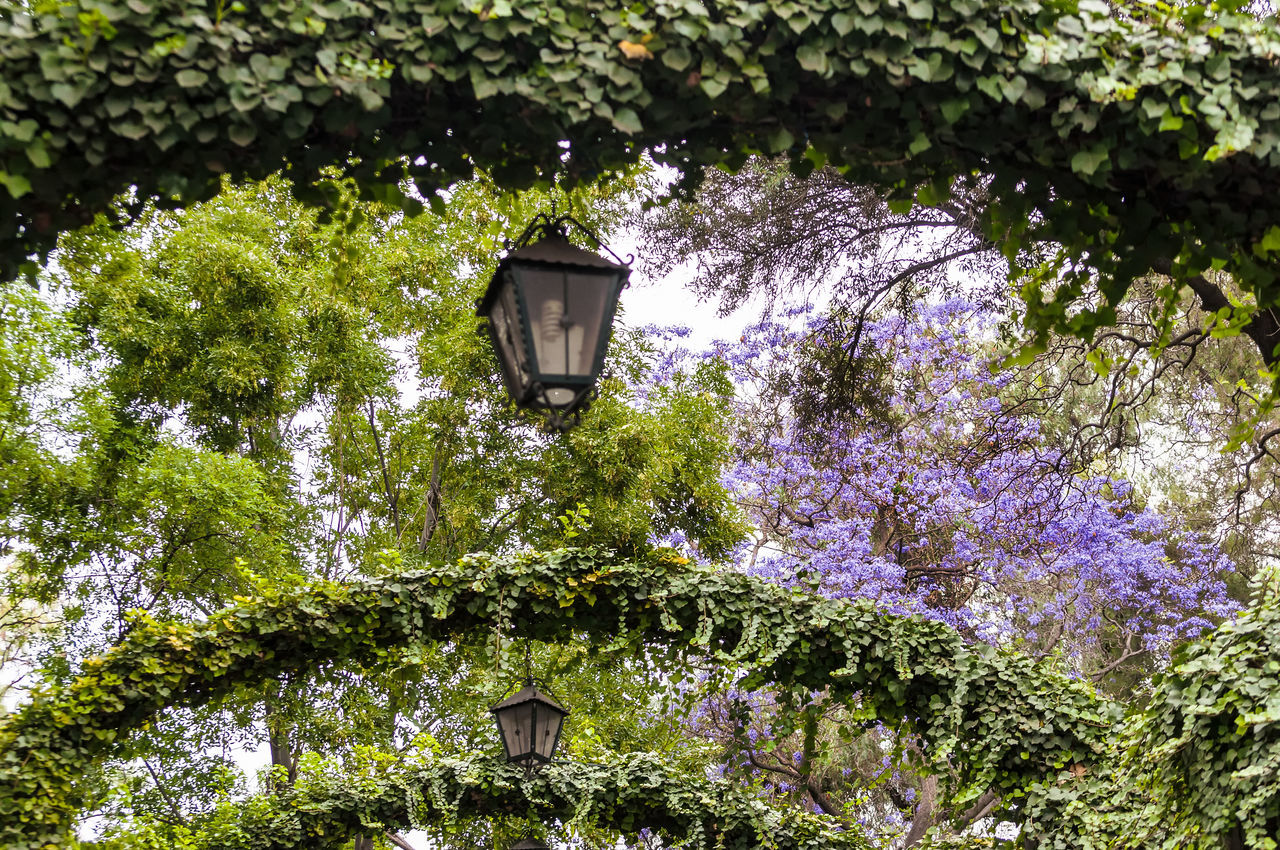 Lush green gardens on Tepeyac Hill in Mexico City Arch Arches Architecture Branch City Day Df Flowers Garden Green Color Growth Guadalupe Hill Lush Lush Foliage Mexican Mexico Mexicocity  Nature Outdoors Tepeyac Tourism Travel Tree Urban
