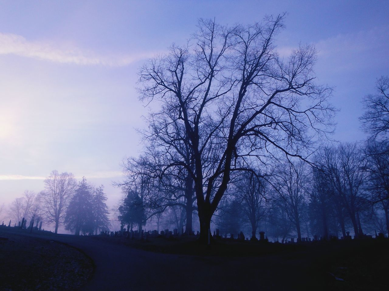 Morning fog across a graveyard Tree Nature Purple Grass No People Springtime Beauty In Nature Outdoors Tranquility Sky Landscape Single Tree Day