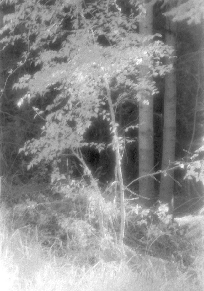 infrared forest Black And White Black&white Blackandwhite Forest Infrared Infrared Photo Moody Forest Mysterious Trees