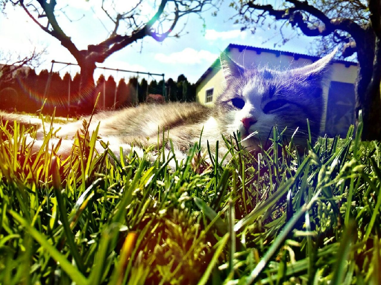 Grass Pets Nature Animal Themes Field Sky Day Beauty In Nature One Animal Outdoors Mammal Growth Close-up Sunlight