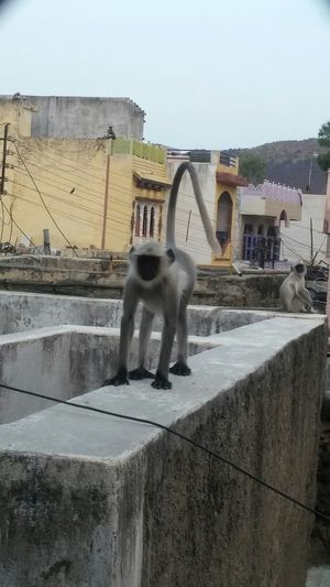Day Motion Outdoors Built Structure Architecture Spraying Water Sky Monkey No People Mammal Monkeys