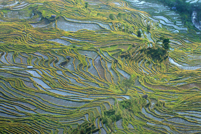 Abstract Agriculture China Farming Geometry High Angle View Holiday Pattern Rural Scene Step Farming Stepfarming Terraced Field Terraced Rice Fields Tropical Climate