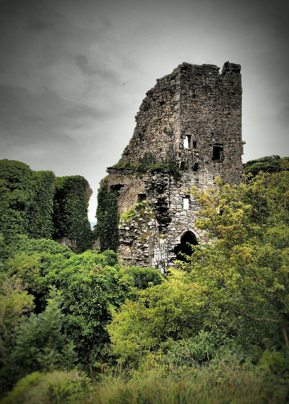 Carrigogunnel Castle County Limerick Ireland Castle Castle Ruin Built Structure History Tower Stonework Destroyed Building Demolished Historic Siege Stone Overgrown Green Color Growth Outdoors Damaged Old The Past Trees Day Defensive Structure Eyemphotography Eyem Best Shots