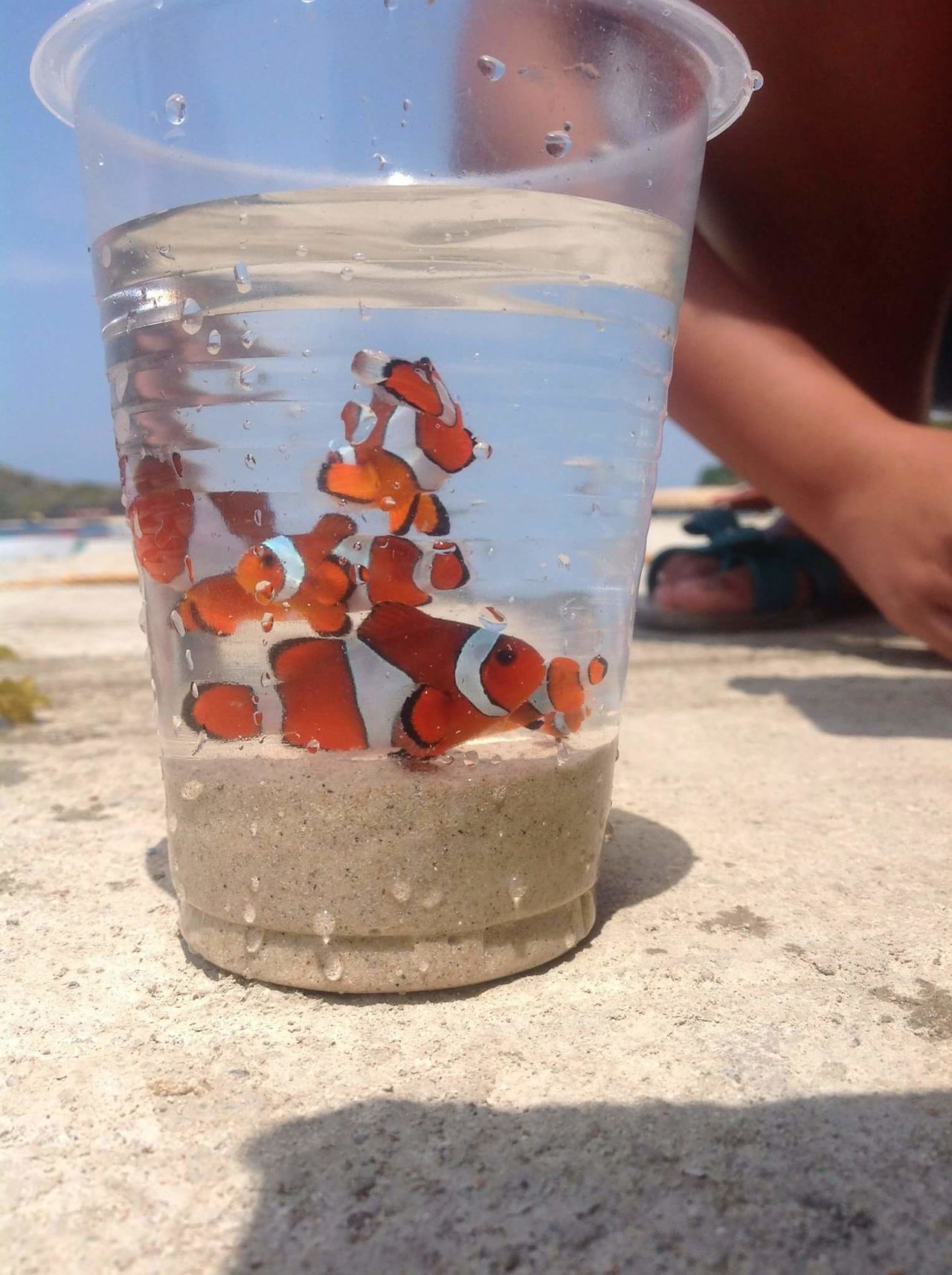 Finding nemo Clownfish HundredIslandPhilippines EyeEmNewHere