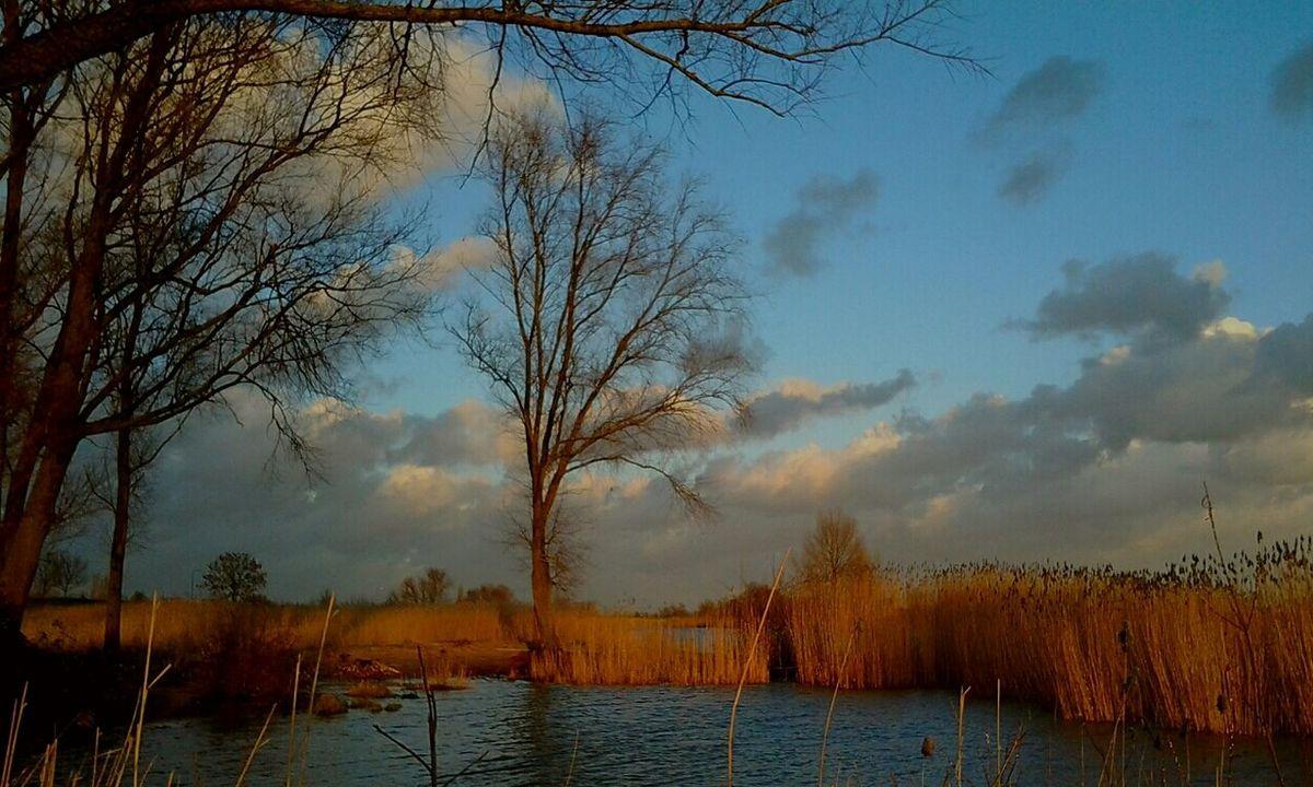 Riverbank View Reeds Dutch Landscapes Dutch Light Showcase: February