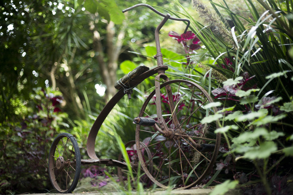 Calm Flowers Garden Green Peaceful Plants Quiet Still Life Sydney Tricycle