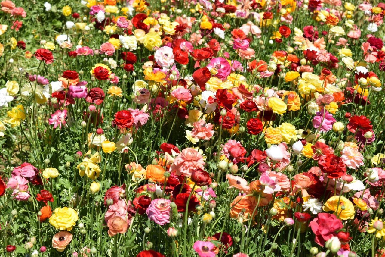 Flower Petal Fragility Nature Freshness Field Growth Beauty In Nature Meadow Grass Flower Head No People Multi Colored Outdoors Variety Blooming Plant Yellow Flowerbed Agriculture Flowers Textured  Background Colorful Variation