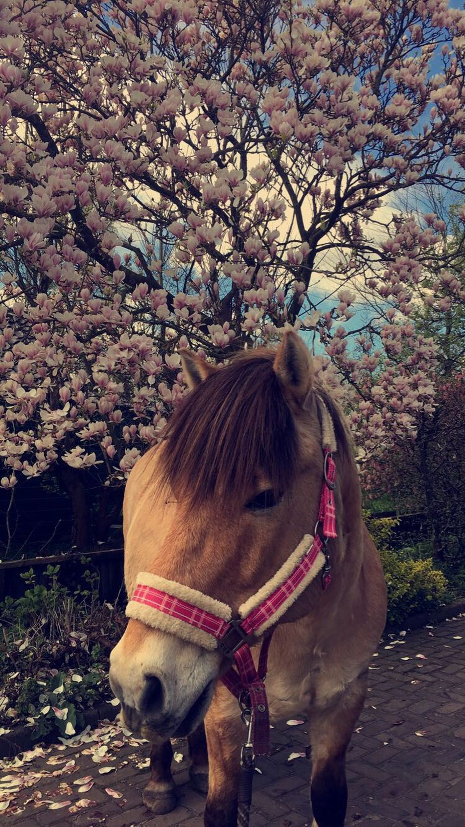 Horse Domestic Animals Animal Themes Mammal One Animal Working Animal Nature Tree Livestock Day Close-up Outdoors Beauty In Nature No People