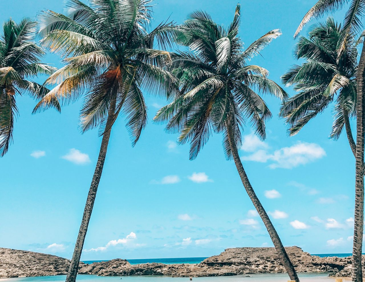 Puerto Rico Palm Tree Tree Sky Low Angle View Nature Day Beauty In Nature Scenics Outdoors Tree Trunk Tranquil Scene Blue Tranquility Growth No People Cloud - Sky Beach Ocean View Island Landscape Horizon Over Water