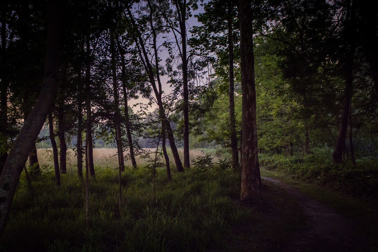 Oasi Fontane Bianche at night Atmosphere Fireflies Fireflies In The Night  Grass Green Color Idyllic Landscape Mistery Atmosphere Nature Night Night View No People Non-urban Scene Scenics Tranquility Tree Tree Wood WoodLand