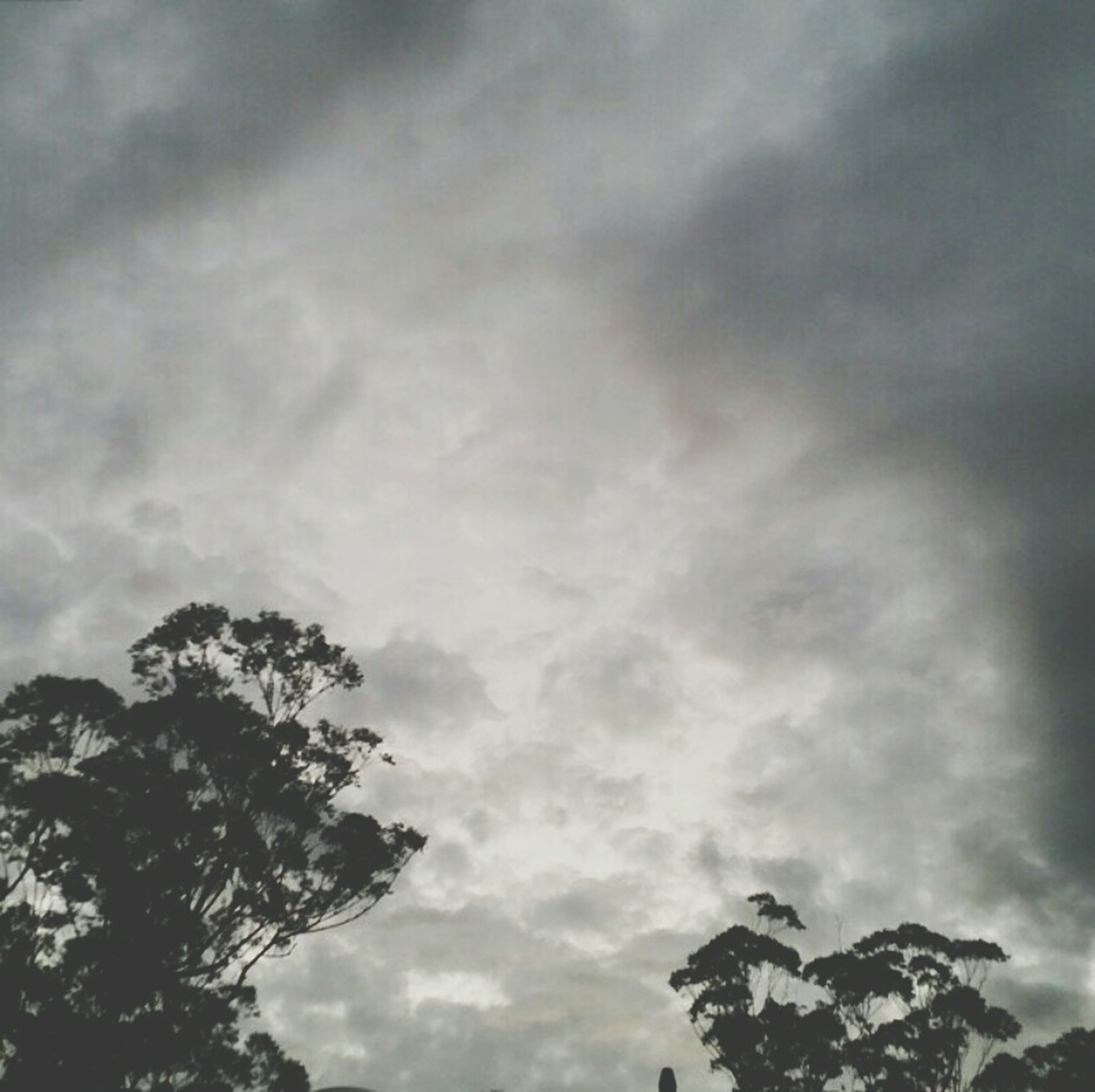 low angle view, sky, cloud - sky, cloudy, tree, weather, overcast, nature, cloud, tranquility, beauty in nature, scenics, silhouette, high section, tranquil scene, outdoors, branch, day, no people, cloudscape