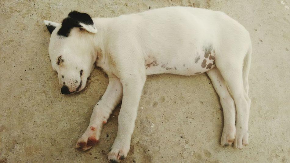 Perro❤ Mascota🐶 MascotaTrankis Mascota Feliz Mascota! Mascota Mascotas 🐶 Perro :33 Relax Relaxation Relajación Dormir Dormilona