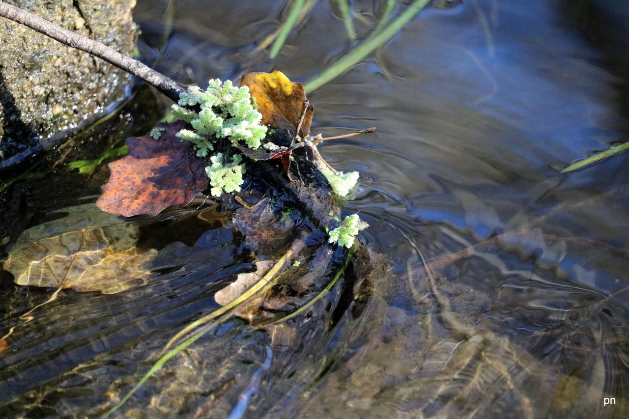 Beauty In Nature Caught Close-up Day Elevated View Flowing Geelong Australia Growth Leaf Leaves Moorabool River Nature No People Outdoors Plant Reflection Rippled Selective Focus Standing Water Tranquility Twig Water Hidden Gem Batesford