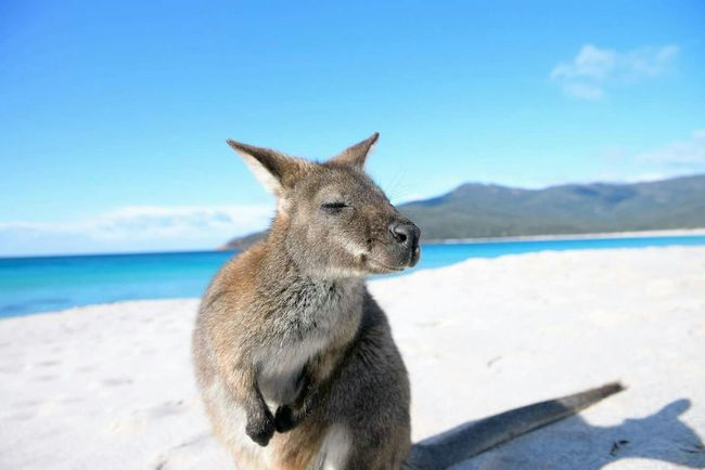 My Country In A Photo Relaxing Taking Photos Sunbathing Hi! Walking Around So sweet Wallaby walking on the beach