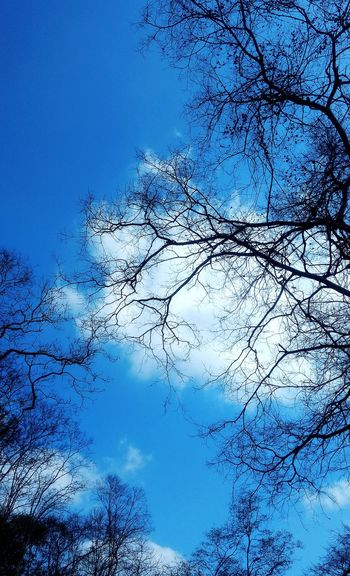 Summer of Mumbai (Sanjay Gandhi National Park) - Live For The Story Summer Sky Blue No People Outdoors Backgrounds Beauty In Nature Nature Park Mumbai Urban Jungle Tree Dry Branches And Sky Clouds The Great Outdoors - 2017 EyeEm Awards
