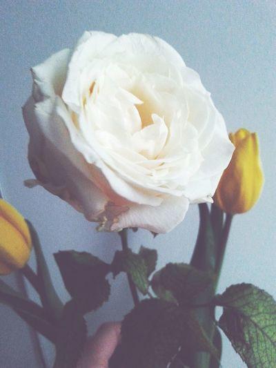 Rose🌹 Vintage Flowers First Eyeem Photo