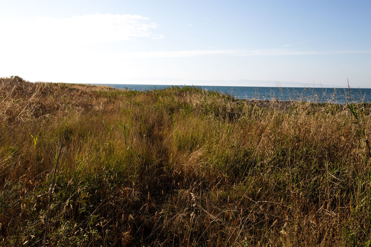 mediterranean vevegation Beauty In Nature Day Grass Growth Horizon Over Water Landscape Marram Grass Mediterranean Nature Mediterranean Sea Mediterranean Vegetation Nature No People Outdoors Plant Scenics Sea Sky Tranquil Scene Water
