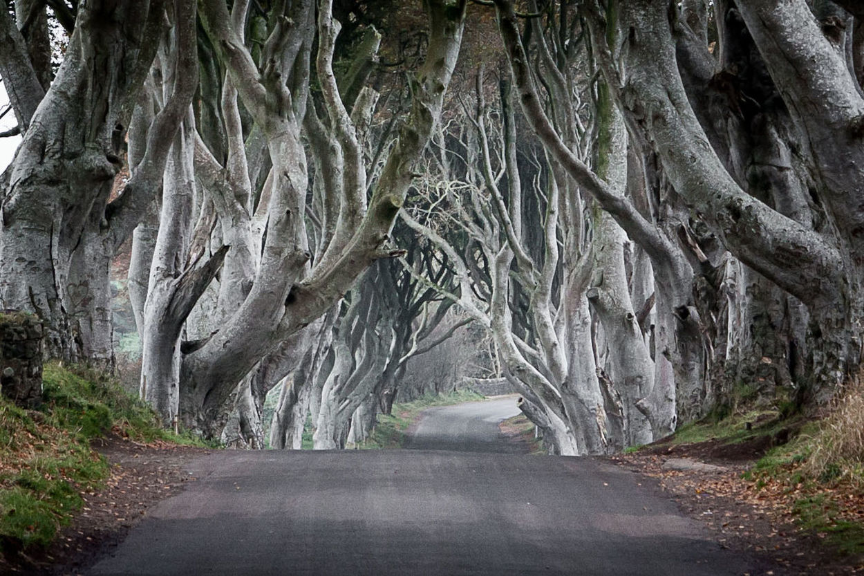 Another one from the dark hedges... Northern Ireland DarkHedges Traveling On The Road TreePorn Perspective Trees Nature