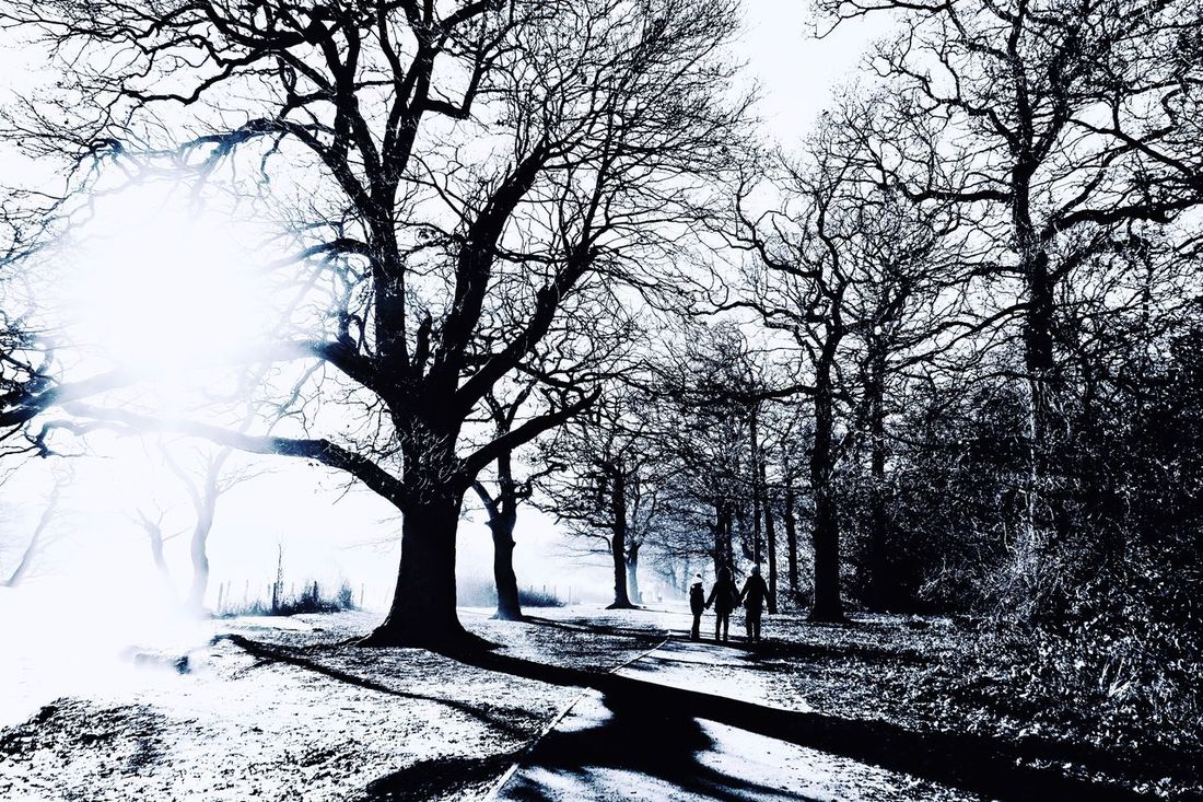 Nature Winter Beauty In Nature Landscape Black & White Black And White Photography Eppingforest Epping Forest